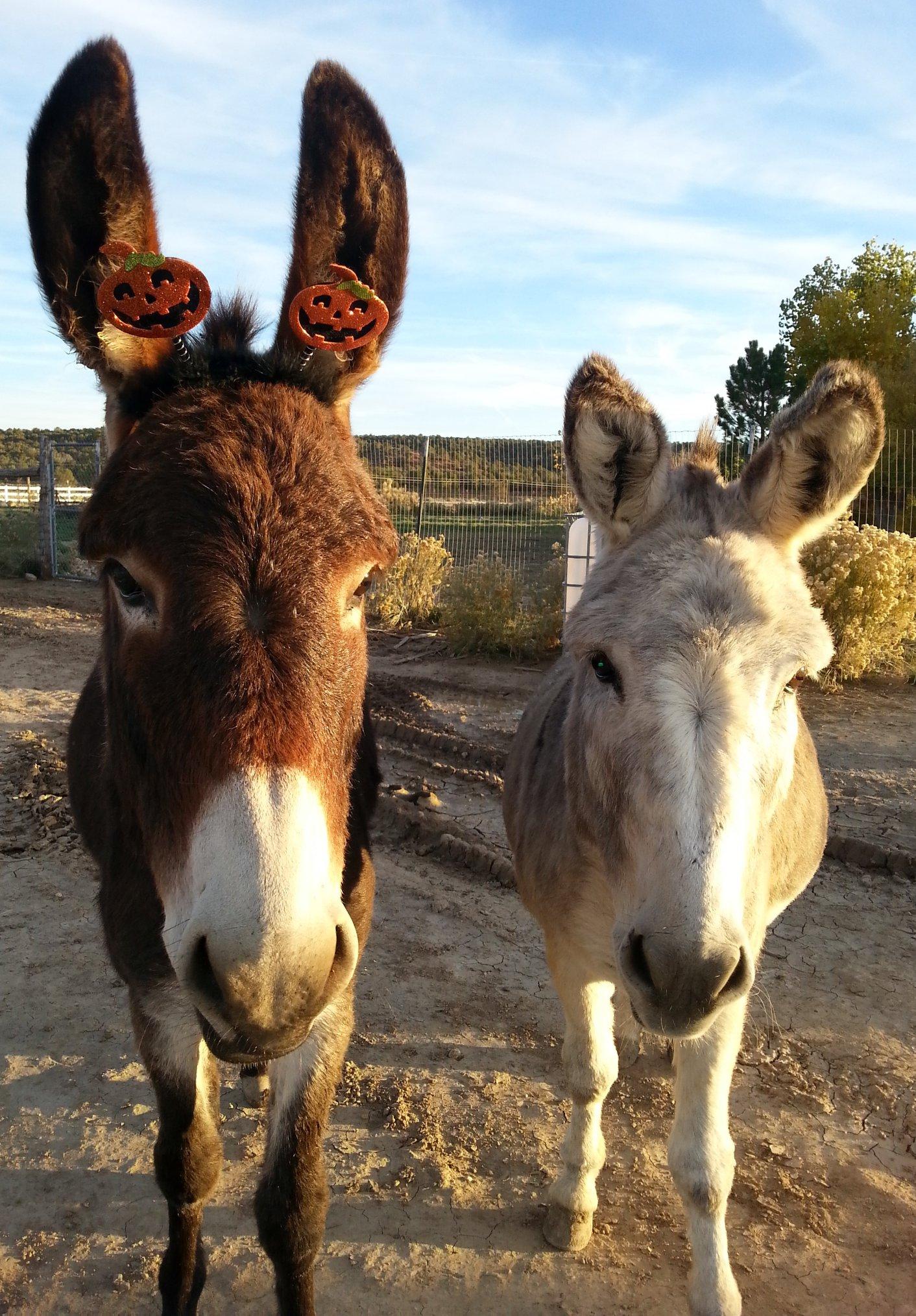 Rescue Donkeys - Otis and Milo