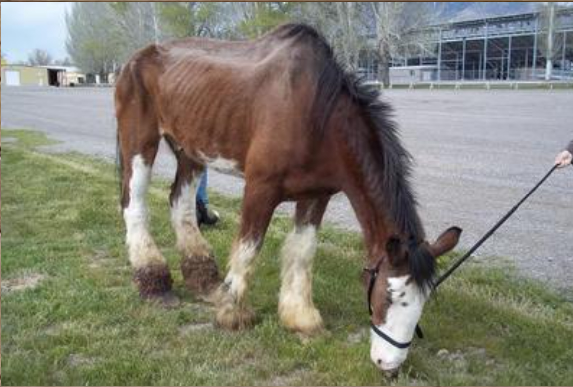 Roy's Legacy Fund - Perseverance Ranch Equine Rescue & Sanctuary