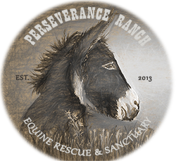 Perseverance Ranch Equine Rescue & Sanctuary - Kanab, Utah