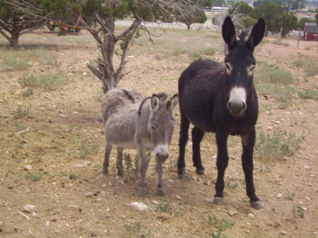 Perseverance Ranch - Equine Rescue & Sanctuary